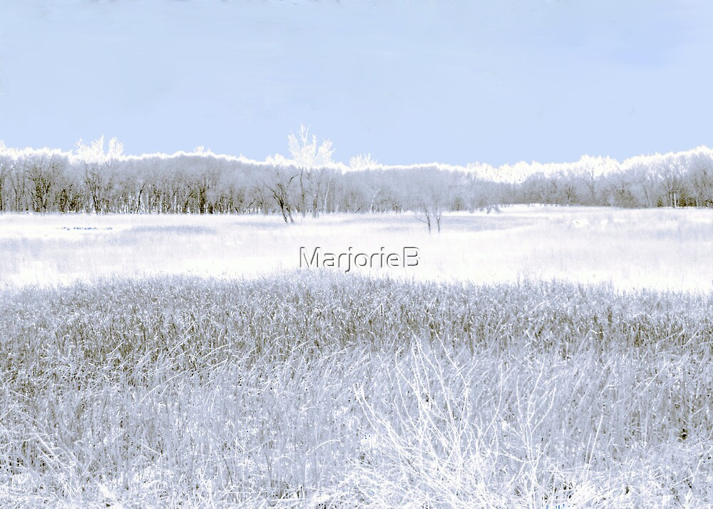Savannah after the Blizzard by MarjorieB