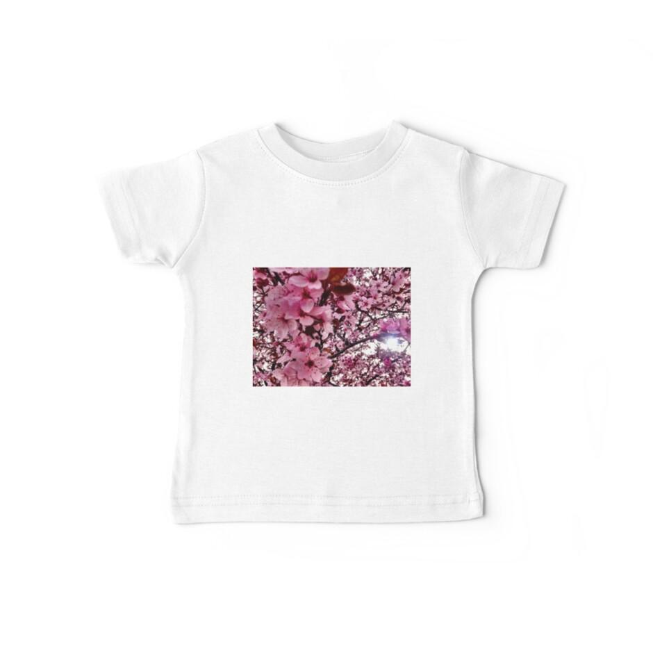 Cherry Blossoms by irishkiwipcards