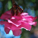 Oleander sweetness  by Lozzar Flowers & Art