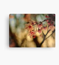 Blossoms & Light Metal Print