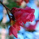 Blow Wind Blow by Lozzar Flowers & Art