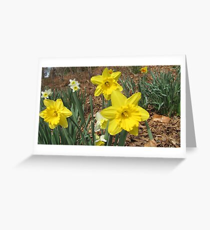 Little Yellows Greeting Card
