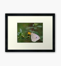 Insect Eating Framed Print