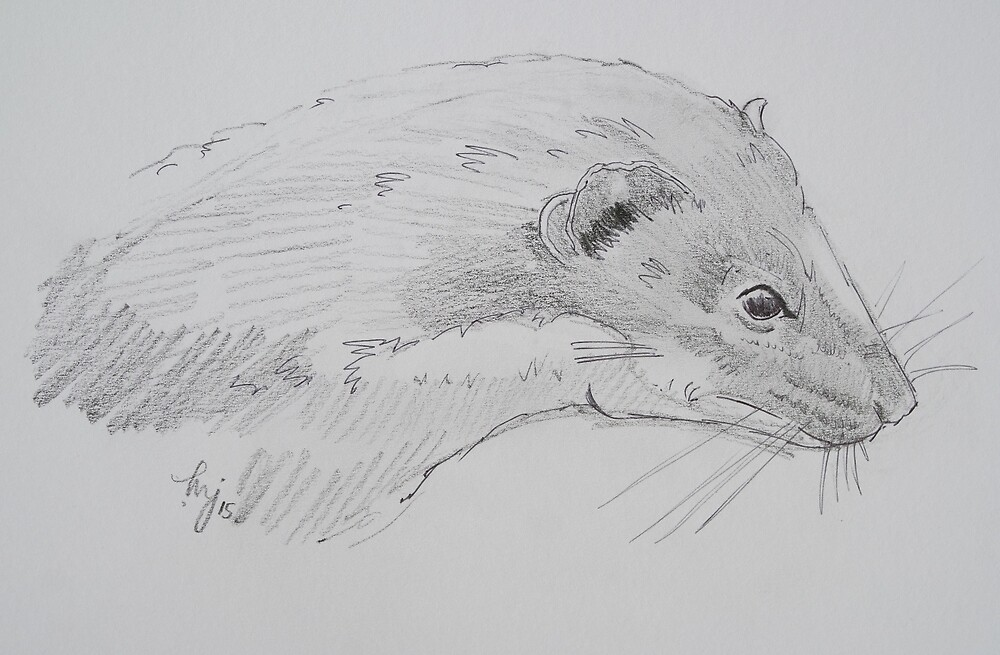 Quot Weasel Head Side View Pencil Drawing Quot By Mikejory Redbubble
