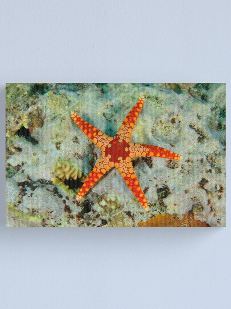 Alternate view of Sea Star Canvas Print