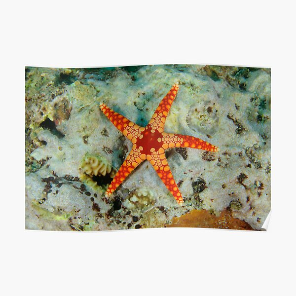Sea Star Poster