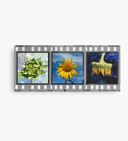 Sunflower Triptych (Click to view complete work) Metal Print