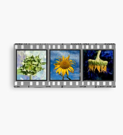 Sunflower Triptych (Click to view complete work) Canvas Print