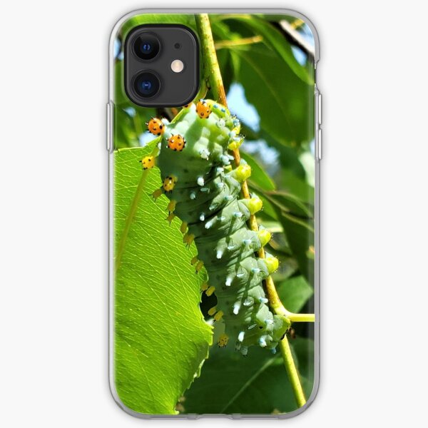 Cecropia (Cleopatra) Moth Caterpillar iPhone Soft Case