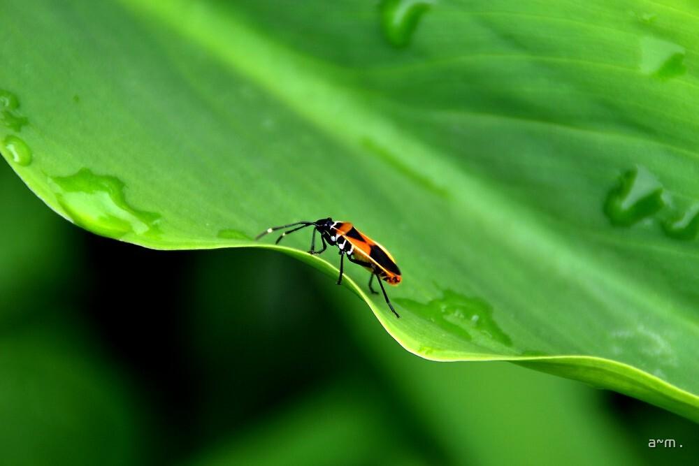 ~Bug on an Undulating Leaf~ by a~m .