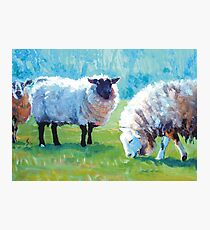 Summer Light - Acrylic Painting of Sheep in Sun Light Photographic Print