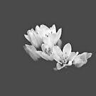 Blossom in the Dark by Fiona Christensen