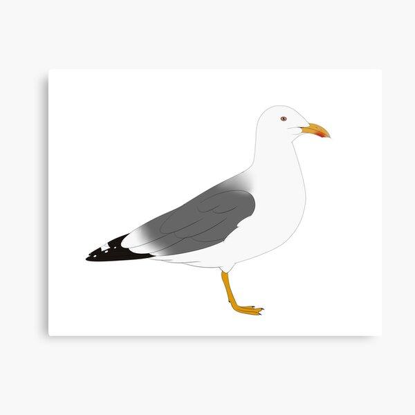 Lesser Black Backed Gull Canvas Print