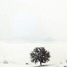 White Landscapes by Marco Vegni
