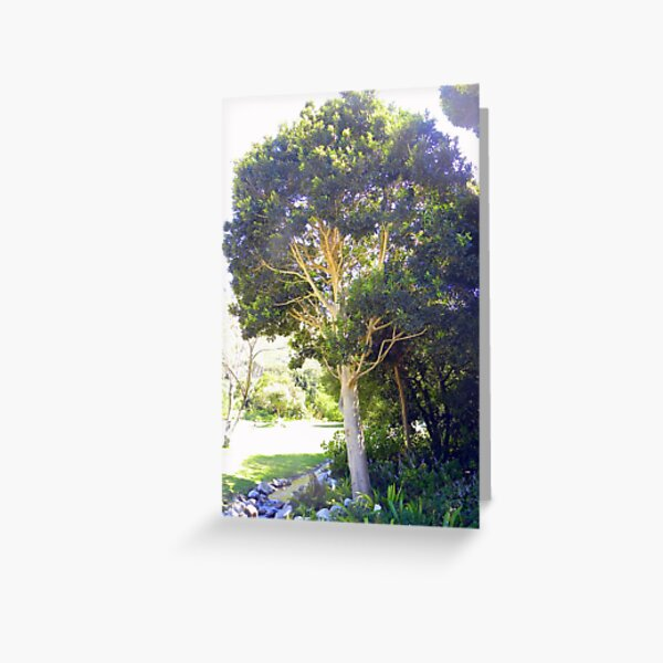 Cape Holly (Ilex mitis) ~ Kaapse Withoutboom Greeting Card