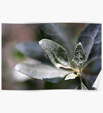 Olive Leaf Poster