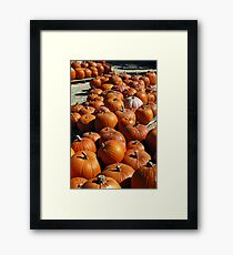 Pumkin Patch Framed Print