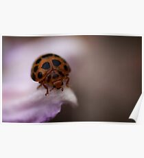 Ladybird on Pink Poster