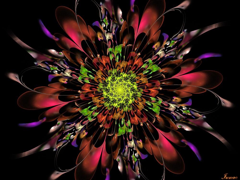 Bloom explosion  by innacas