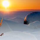 Arctic cene by natans
