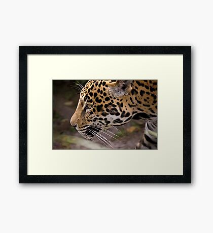 Stalking Jaguar Framed Print