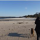 on Husky Beach, Jervis Bay, NSW by BronReid