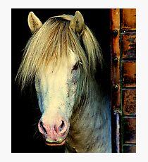 Pony portrait Photographic Print