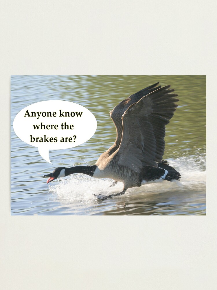 Alternate view of Bird Brakes Photographic Print
