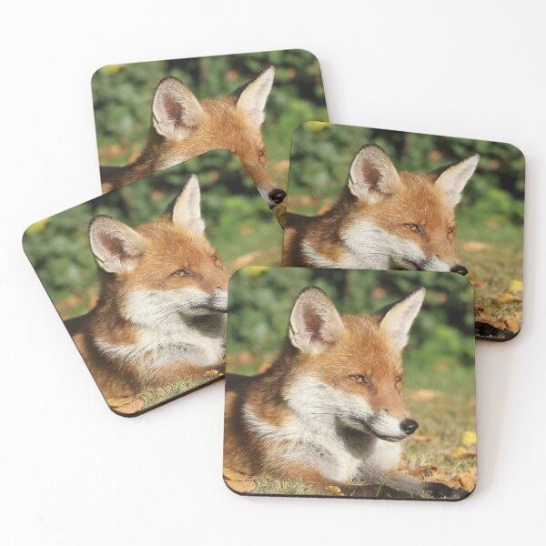 Wanstead Fox. Coasters (Set of 4)