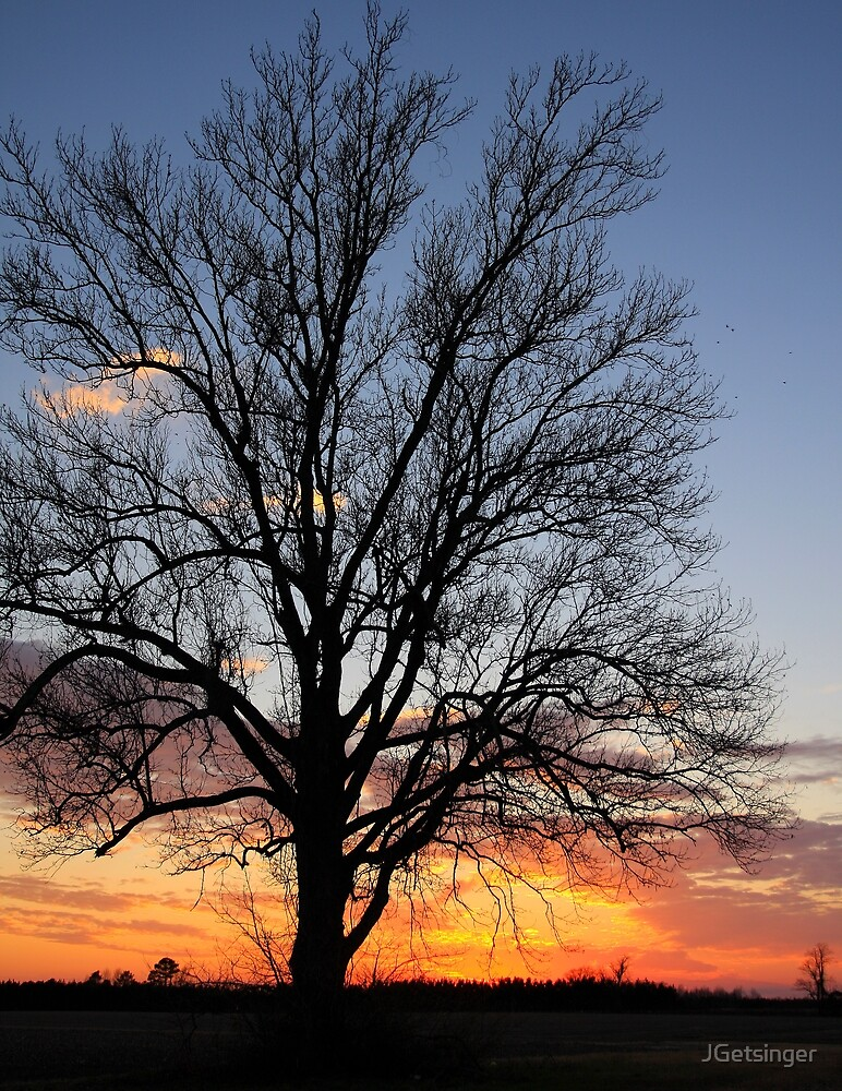 Sunset Tree by JGetsinger