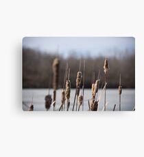 Winter Reeds - Diamond Lake Leinwanddruck