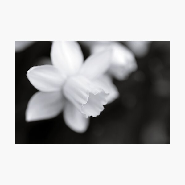 Softly Photographic Print
