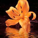 Orange Lily by Sheryl Kasper
