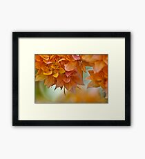 Nature creation: On Featured: The-women-photographer Group Framed Print