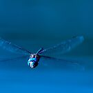 Funny Face Dragonfly by Tracy Riddell