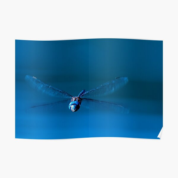 Funny Face Dragonfly Poster