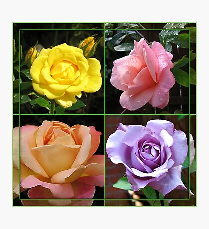 Roses Collage in Mirrored Frame Photographic Print