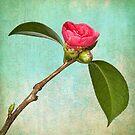 Little Beauty by Leslie Nicole