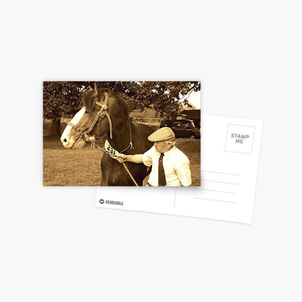 Shire Horse and handler Postcard