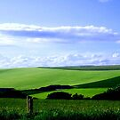 South Downs England ©  by Dawn Becker
