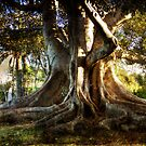 Roots by gemlenz
