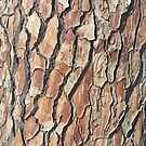 Close-up of tree bark - lots of wood texture and patterns - forest trees by SJMcDermott