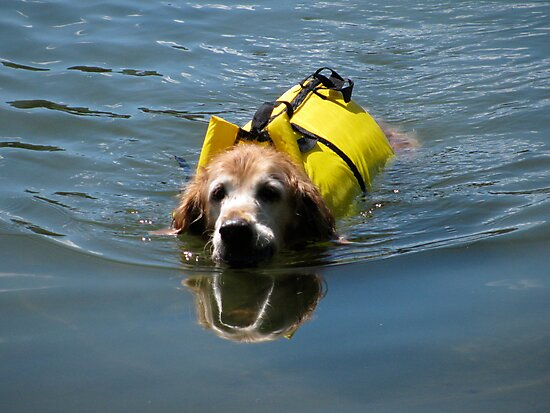 Winnie Swimming - O'Haver Lake, Colorado by Cari Graves