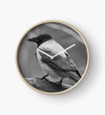 Showing the profile. Hooded Crow in bw Clock