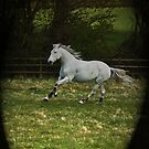 Just having a gallop by laurav