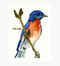 Sialia Sialis (#3) Eastern Bluebird Art Print