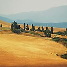 Cypress Trees In Italy by Sam Mortimer