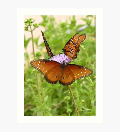 Butterfly ~ Trio of Queens Art Print