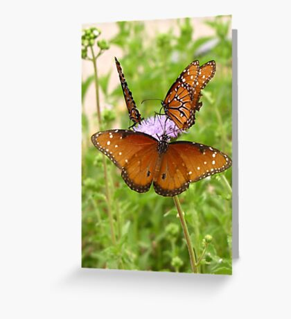Butterfly ~ Trio of Queens Greeting Card