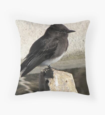 Black Phoebe ~ Tyrant Flycatcher Throw Pillow